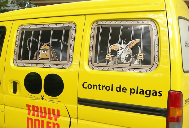 Contratar servicios de control de plagas en bizkaia for Control de plagas sevilla