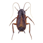 fumigacion cucarachas