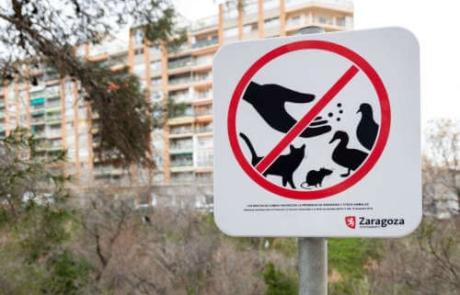 Lucha contra la plaga de palomas y roedores en Zaragoza