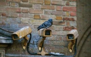 Métodos para el control de plagas de palomas en Bilbao
