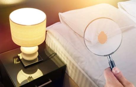 ¿Plagas de chinches en los apartamentos turísticos de Bizkaia?