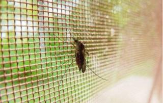 Quejas vecinales por una plaga de insectos en Sestao (Bizkaia)