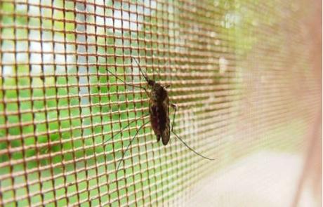 Plaga de mosquitos en Sestao (Bizkaia)