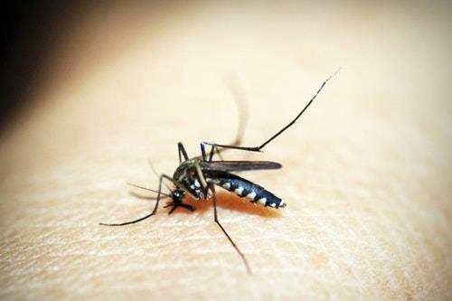 ¿Cuáles son las plagas de mosquitos más habituales a nuestro alrededor?