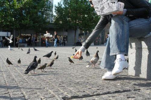 Barakaldo solicita la colaboración ciudadana para atajar la plaga de palomas