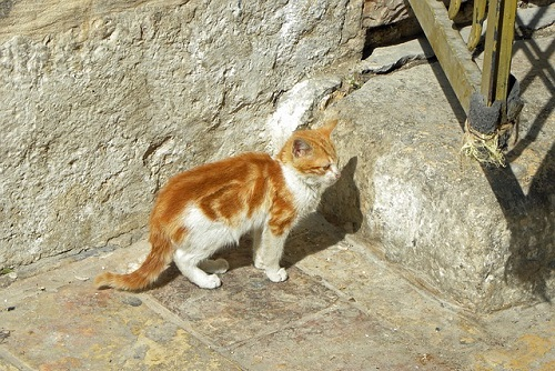 Campaña para controlar la plaga de gatos callejeros en Etxebarri (Bizkaia)