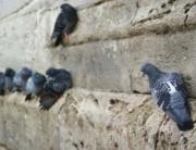 Control de plagas de palomas y gaviotas en Barakaldo, Bizkaia