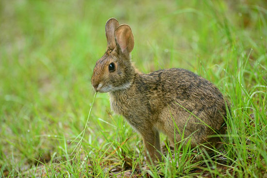 control plagas conejos
