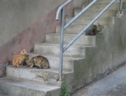 Control de plagas de gatos en Bilbao