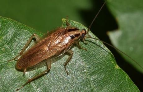 cucaracha bilbao