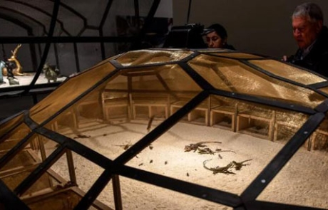 cucarachas museo bilbao