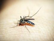 Efectos del cambio climático en el control de plagas en Bizkaia