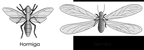 diferencia termitas hormigas con alas