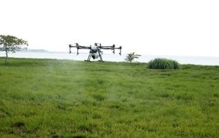 Nuevo método para eliminar ratas, los drones