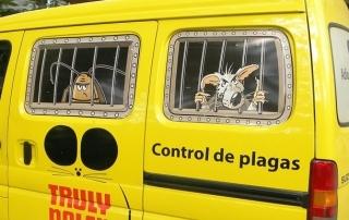 elegir servicios de control de plagas