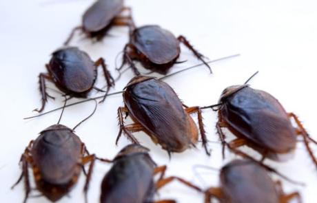 empresa plaga cucarachas