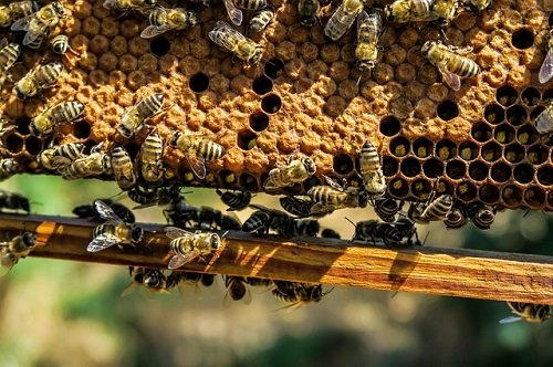 ¿Están los insectos al borde de la extinción?