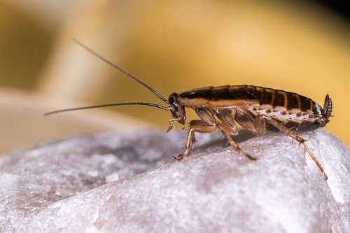 Fobia a sufrir una plaga de cucarachas en Bilbao