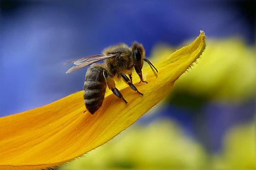 fumigaciones abejas
