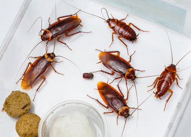 fumigadores de cucarachas