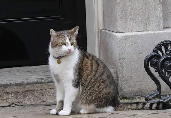gato larry