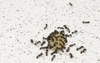 hormigas en Bilbao