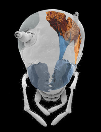 imagen mandibula cucaracha