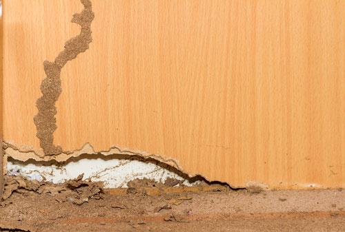 madera afectada termitas