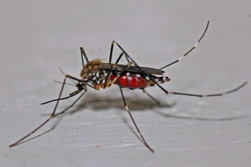 Una nueva plaga de insectos amenaza Bilbao y Bizkaia