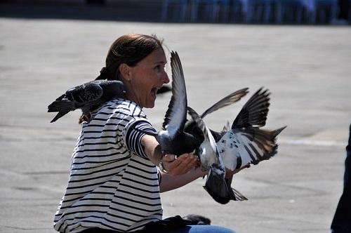 La plaga de palomas, un peligro para los ciudadanos de Bilbao y Bizkaia