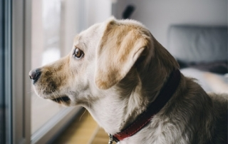 perros control de plagas