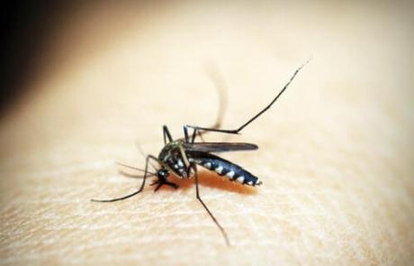 Se duplica la plaga del mosquito tigre en 2020