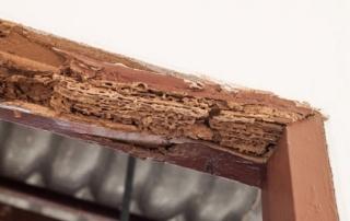 plaga termitas bizkaia