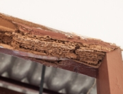 Plaga de termitas en el casco histórico de Elorrio, Bizkaia