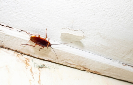 ¿Las cucarachas son inmunes a los insecticidas?