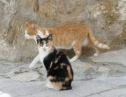 ¿Plaga de gatos en Basauri, Bizkaia?