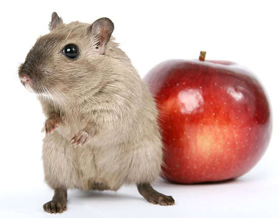 ratas cucarachas plagas