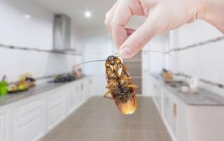 Remedios naturales para combatir a las cucarachas