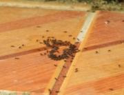 Remedios caseros para evitar una plaga de hormigas en Bilbao-evitar-plaga-hormigas-Bilbao