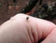 La ropa de grafeno ayuda a evitar las picaduras de mosquitos
