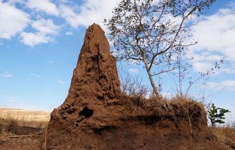 Termitas en Brasil