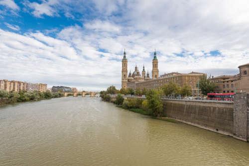 Aumento del presupuesto para el control de plagas en Zaragoza